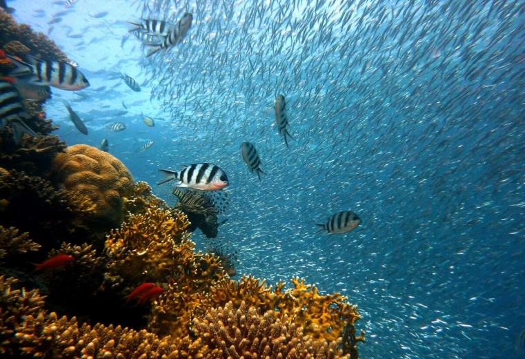 Seminar: Sustainable Use of Oceans